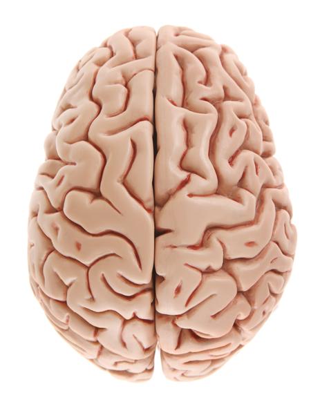 ადამიანის თავის ტვინი ორი ნახევარსფეროსგან შედგება